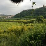 View of orchards and Obidos