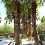 Zwei Pools + viele Palmen
