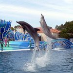 Saw this dolphin show twice because it's so fun!