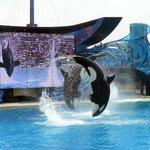 Shamu doesn't disappoint.