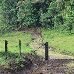 lower field brown trail