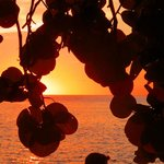 Sunset through the sea grape leaves ...
