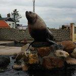 Big boss de walrus