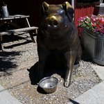 Hot day, at least the pig has water.
