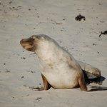 Seal Bay, Kangaroo Island