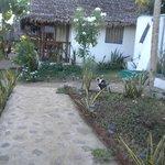 i bungalow/giardino/papaya e gatti