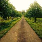 Worralls Grove Photo