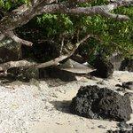 Hidden Beach at Remote Resort