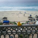 the duck enjoyed the view from our room