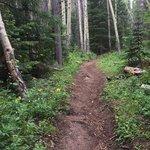Millcreek trail