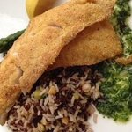 Early Evening Feature Cornmeal Crusted Red Snapped