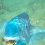 blue angel fish up close and personal