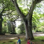 kids taking a break beneath a beautiful tree