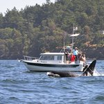 orcas in Victoria, BC