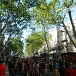 Tree's above Las Ramblas