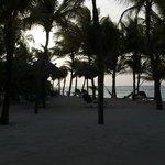 Shady beach areas