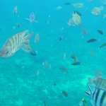 Diving at the Pontoon, above the hotel's own coral reef. Amazing