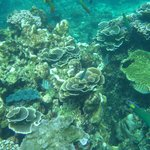 Healthy and vibrant corals, a mere 200m from the beach