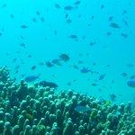 House reef, massive amount of aquatic life.