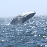 Spending quality time with the Humpback mom and little one - #2 - no cropping, was really this c