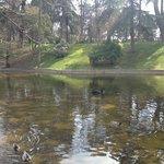 pond- south of park