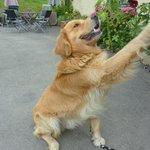 Finlay, the pub dog