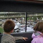 kids were amused the land rover drove over streams