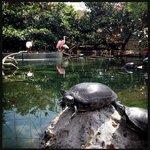 In questa mostra on-air trovano posto volatili tropicali e tartarughe