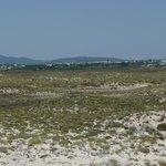 La vue, dos à la mer, de la dune ...
