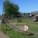 Animal Farm Park