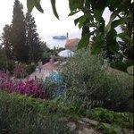 fiori e piscina