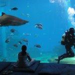 Наблюдение за акулой и водолазом;)