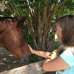 Foto de Bluebird Gap Farm
