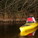 Twilight paddle tour, Everglades, FL