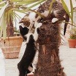 i cucciolini che giocano :)
