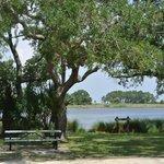picnic area at St Marks Wildlife Refuge