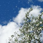 A novel experience-the Cottonwoods 'snow storm'!