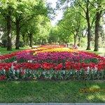 Flowering garden within the Kremlin