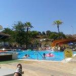 Cettia pool