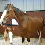 Mare with two-day old filly.