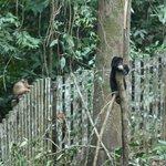 Sun bear with macaque onlooker