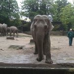 Elephant waiting for food