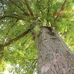 relax sotto agli alberi