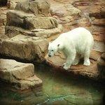 The polar bear was adorable.