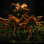 Children view huge spider crabs from a bubble inside the tank.