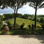 Fun in Tuscany - Vineyard Tour and Cooking
