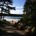 Nickerson State Park Foto