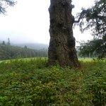 Bosque Dunkeld