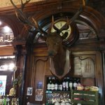 stag's head over bar