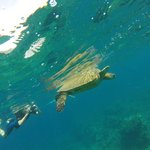 Swimming with a Seaturtle